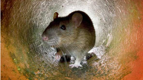 desratizacion-desinfecciones-exterminator