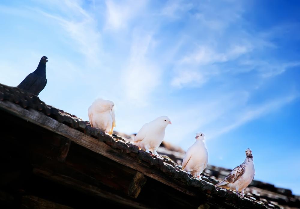 gestion y control plagas de aves