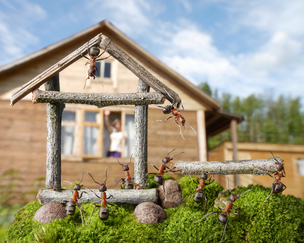 Desinsectación hormigas Madrid